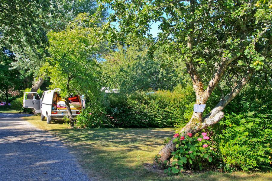Camping Du Pouldu : emplacemen ombragé au camping Finistère
